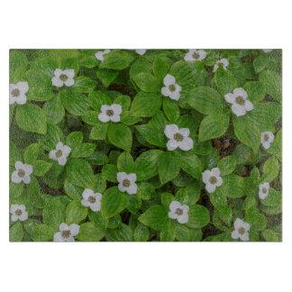 Plan rapproché de bunchberry avec les fleurs planche à trancher