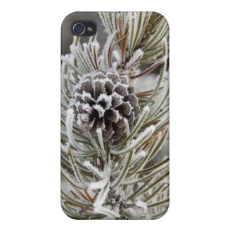 Plan rapproché de cône congelé de pin, Yellowstone Coques iPhone 4