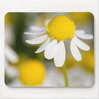 Plan rapproché de fleur de camomille, Hongrie Tapis De Souris