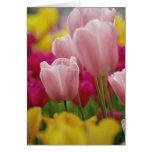Plan rapproché de fleur de tulipe, jardins de Kuek Carte De Vœux
