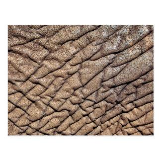 Plan rapproché de la peau d'éléphant africain carte postale