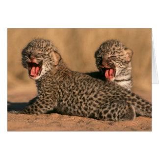 Plan rapproché de léopard nouveau-né (Panthera Carte De Vœux