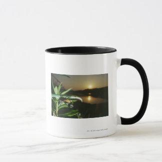 Plan rapproché de papillon sur la feuille au mug