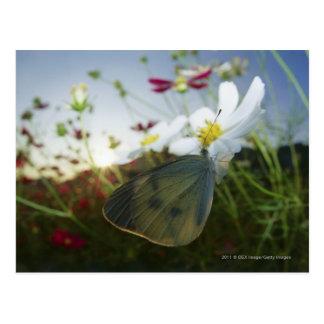 Plan rapproché de papillon sur la fleur carte postale