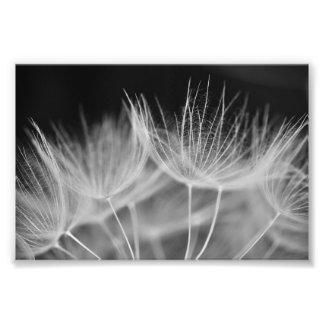 Plan rapproché de pissenlit dans le blanc noir impression photo