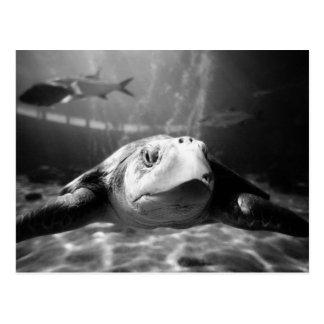 Plan rapproché de tortue de mer carte postale