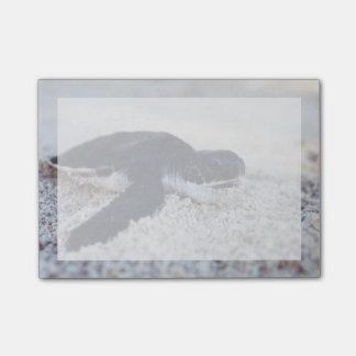 Plan rapproché des hatchings 1 de tortue de mer post-it®