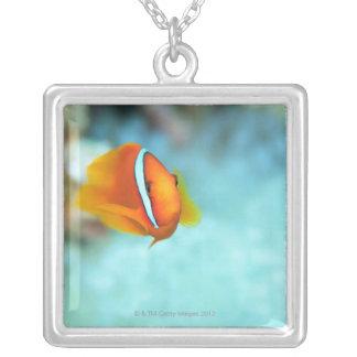 Plan rapproché des poissons d'anémone de tomate, pendentif carré