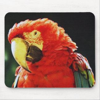 Plan rapproché d'oiseau de perroquet d'ara à ailes tapis de souris