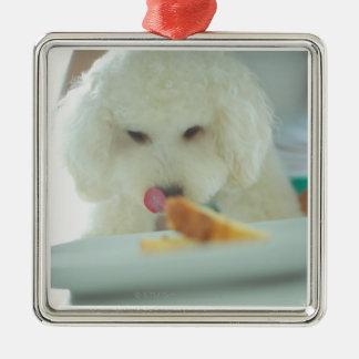 Plan rapproché d'un caniche miniature mangeant de ornement carré argenté