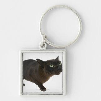 Plan rapproché d'un chat 2 porte-clé carré argenté