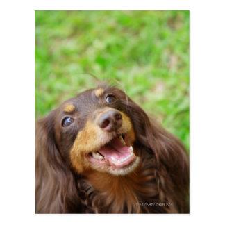 Plan rapproché d'un chien de teckel cartes postales