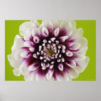 Plan rapproché d'une fleur posters