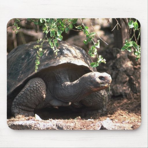 Plan rapproché en forme de dôme géant de tortue tapis de souris