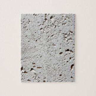 Plan rapproché fossile de surface de tuile de puzzle