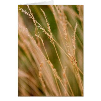Plan rapproché grand de prairie d'herbe (carte) carte de vœux