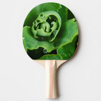 Plan rapproché, plante succulent avec des raquette tennis de table