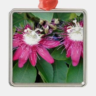 Plan rapproché rouge de deux fleurs de passion ornement carré argenté