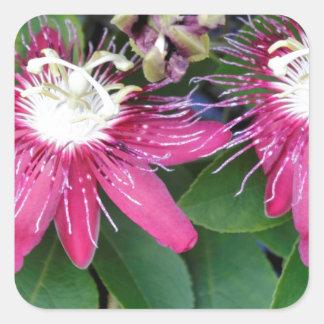Plan rapproché rouge de deux fleurs de passion sticker carré