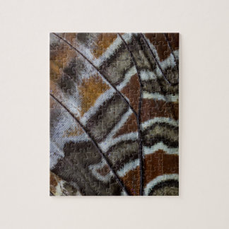 Plan rapproché tropical de papillon de Brown Puzzle