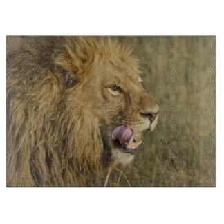 Planche À Découper Portrait de mâle de lion léchant sa bouche