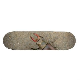 Planche à roulettes de scarabée de mâle plateaux de skateboards customisés
