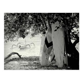 Planches de surf sous un arbre cartes postales