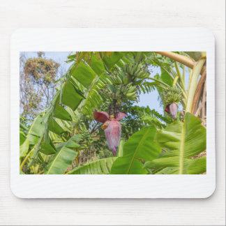 Plantation de banane en île blême de Sok Kwu Lamma Tapis De Souris