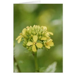 Plante de moutarde carte de vœux
