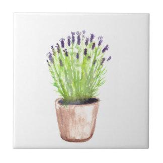 Plante en pot d'herbe de lavande carreau