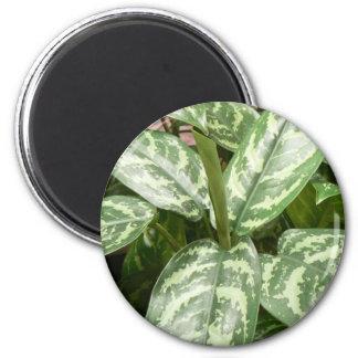 Plante mis en pot magnet rond 8 cm