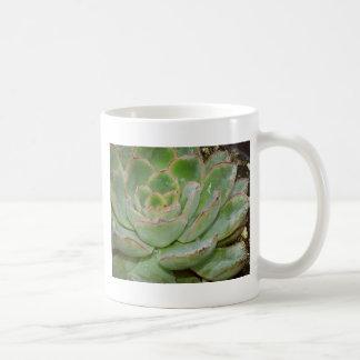 Plante succulent mug