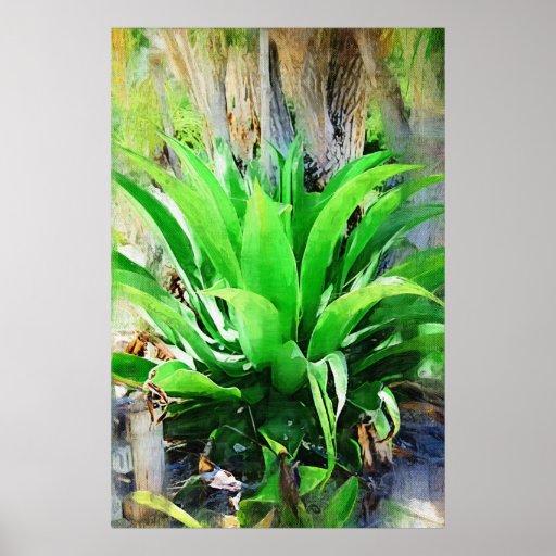 Plante tropicale jardin tropical de fairchild posters for Plante ornementale jardin