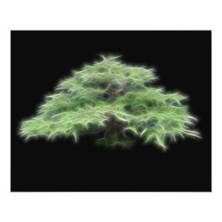 Plante verte d'arbre de bonsaïs prospectus