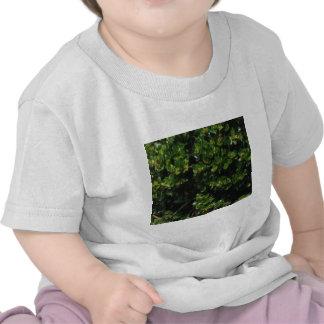 Plante verte t-shirts