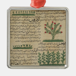 Plantes botaniques, illustration de ' ornement carré argenté