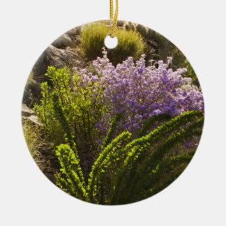 Plantes de désert de Chihuahuan en fleur Ornement Rond En Céramique