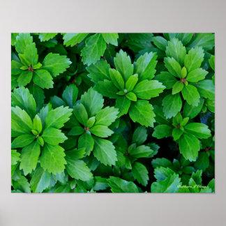 plantes du jardin de Ken Affiche
