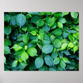 plantes du jardin de Ken Posters