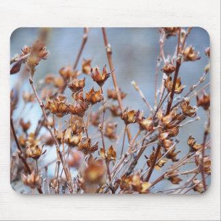 plantes tapis de souris