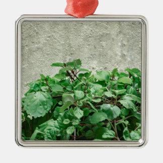 Plantes vertes contre le mur en béton ornement carré argenté