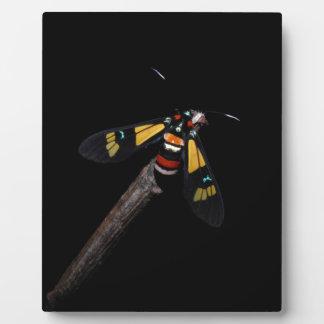 Plaque Photo Belle mite d'arc-en-ciel (foletti d'Euchromia)