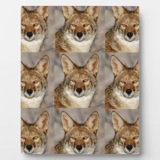Plaque Photo boîtes de coyotes
