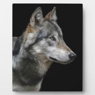 Plaque Photo Carnivore de prédateur d'arrière - plan de noir de
