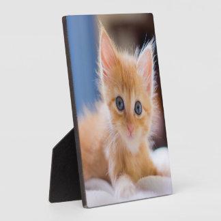 Plaque Photo Chat mignon avec des yeux bleus