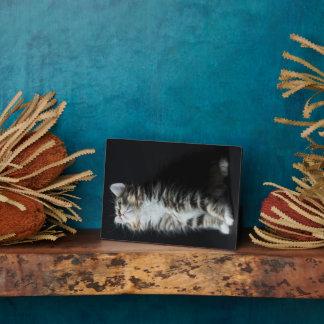 Plaque Photo Chat tigré grand