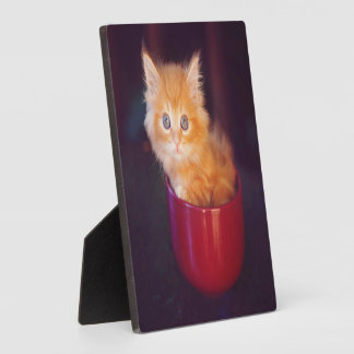 Plaque Photo Chaton orange dans une tasse rouge