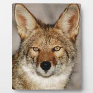 Plaque Photo de coyote fin