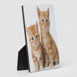 Plaque Photo Deux chatons adorables