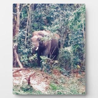 Plaque Photo Éléphant en Thaïlande
